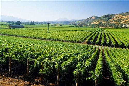 红酒的主要产地有哪些?不同产区的红酒有什么特色?