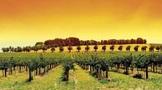 澳大利亚红酒哪个产区好?澳大利亚红酒十大知名产区