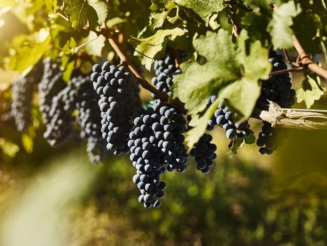 中国葡萄酒探索可持续发展之道,引起专家和业界的警醒