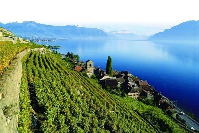 瑞士葡萄酒怎么样?瑞士葡萄酒有哪些产区?