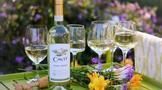 为什么巴罗洛葡萄酒不好喝?巴罗洛葡萄酒需要醒酒吗?