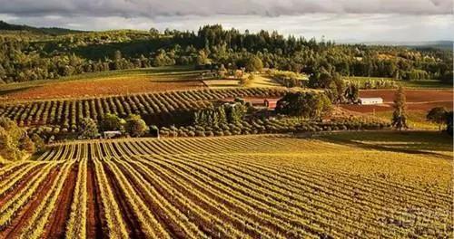 三月全美葡萄酒业或损失4亿美元!平均每家酒厂裁员4人,销售额腰斩
