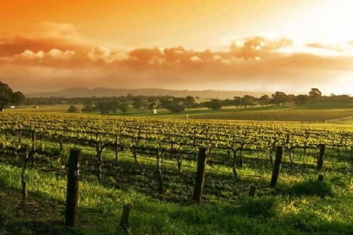 世界上最好的红葡萄酒产地在哪里