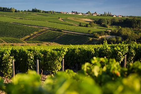 法国葡萄酒产区及排名