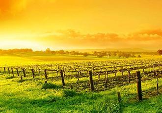 朗格多克产区红酒如何