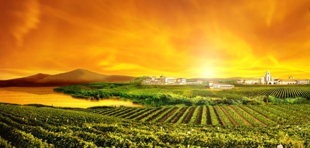 托斯卡纳葡萄酒产区