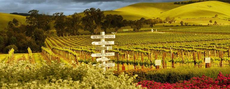 巴罗萨谷葡萄酒产区