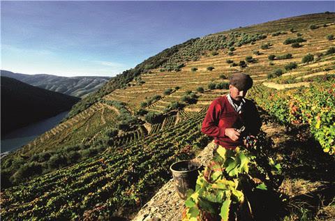 葡萄牙葡萄酒产区