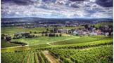 美国最有代表性的葡萄酒产区