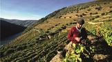 葡萄牙葡萄酒产区介绍