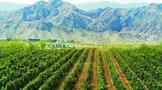 德国最大的葡萄酒种植区
