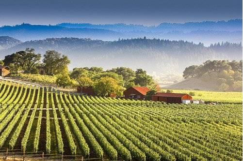 美国加州最著名葡萄酒产区