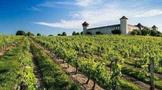 中国葡萄酒最大产地