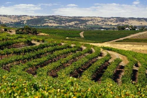 澳大利亚六大葡萄酒产区