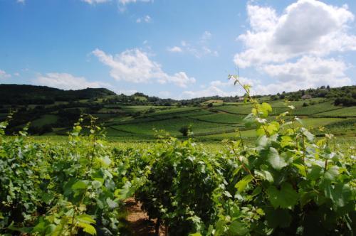 勃艮第产区五大酒庄