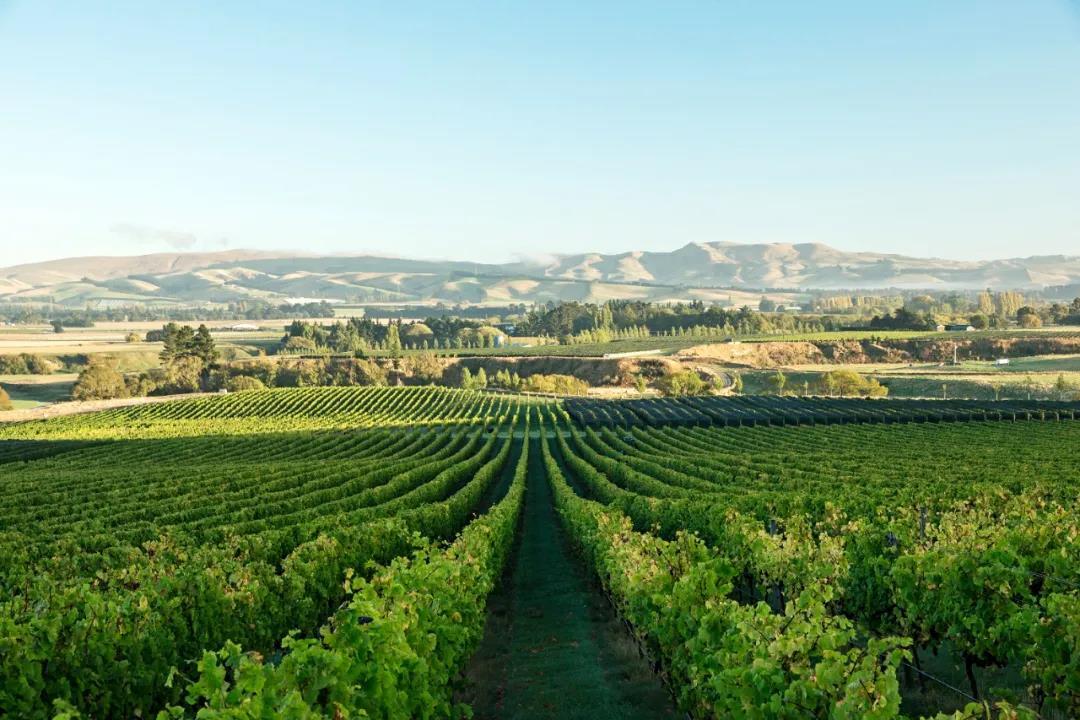 坎特伯雷和北坎特伯雷:葡萄酒行业的无名英雄