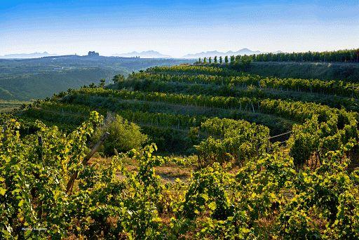 烟台蓬莱产区:精品国产葡萄酒产区