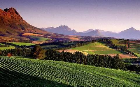 贺兰山葡萄酒产区:走向世界的紫色名片