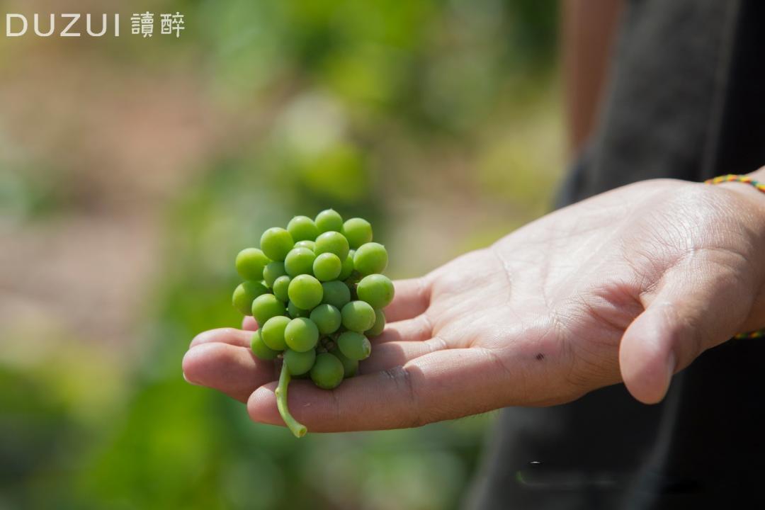 2020年度全国酿酒产业产量数据