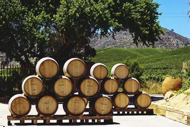 卡萨布兰卡谷:智利白葡萄酒的代名词