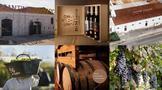 意大利葡萄酒的中国出口价值增长了98%!意酒到底有什么好?