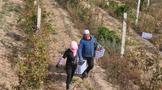 寻找中国第一个葡萄酒产区,聊聊建设中国产区的意义