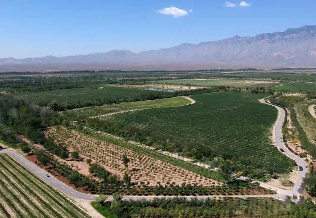 宁夏:全国首个针对特色产业的开放发展综合试验区