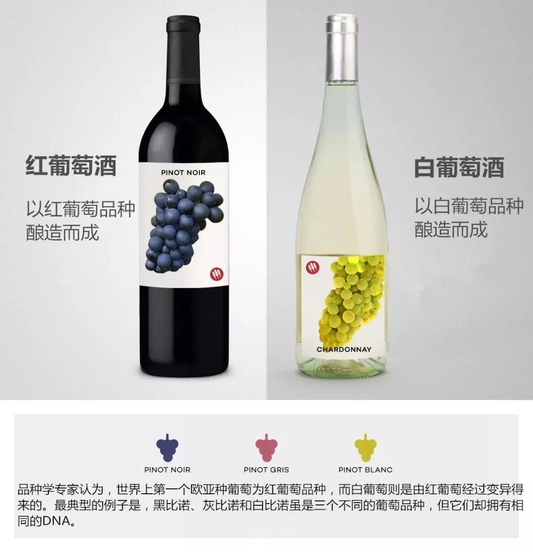 红葡萄酒VS白葡萄酒的区别:不止颜色不同!
